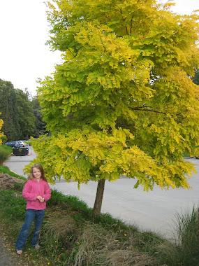Amy & tree