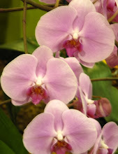 Orchids of Singapore Exhibit