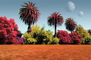 Plantas de otros mundos