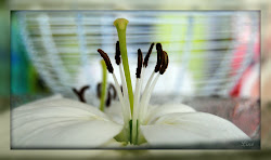 Lilje