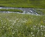 Anzer Balı ,Anzer Polen, Yayla Kaçkar Balı, Çiçek Balı, Kestane Balı