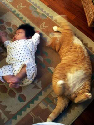 Bayi Kucing atau Kucing Bayi:Work At Home