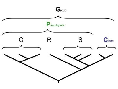 Defining a paraphytic group P as the complement of one monophyletic group, C, with respect to another, G