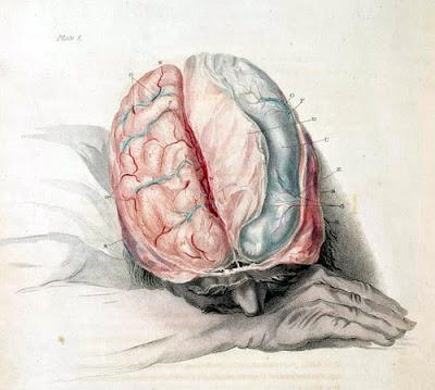 cerebro humano charles bell