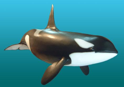 Imágenes de Animales marinos.