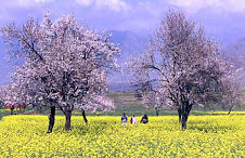 Spring season in AJK