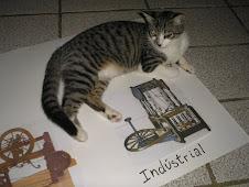 Minha gata estudando História.