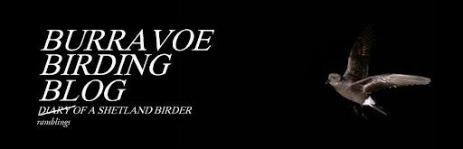 Burravoe Birding