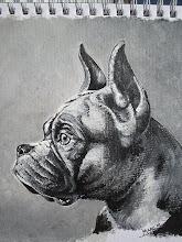 Hondenportret boxer