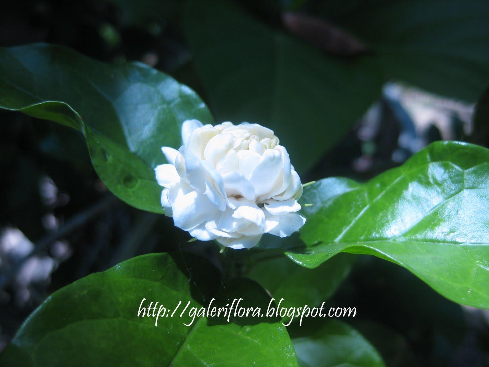 di antara bunga bunga yang telah menjadi ilham penulis lirik lagu
