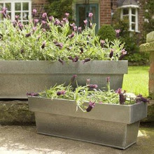 WINDOW BOX PLANTING IDEAS