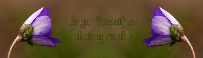 Ergo Vassiljev photography