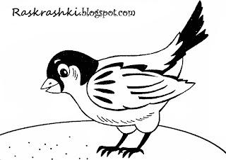 Раскрашки для детей птица