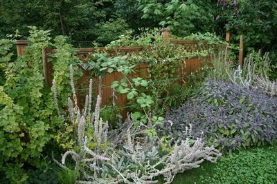 Invading blackberry vines