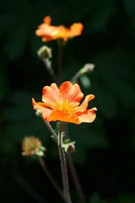 Pretty orange flower