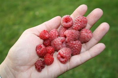 Large and small red raspberries