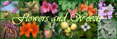 Garden collage header
