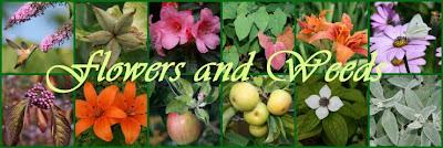 Garden collage header