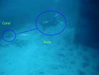 Rafa llegando al coral(-52mts)