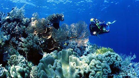 Wisata Laut