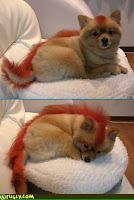 Dog Hair Style
