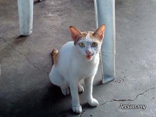 Cat (SE g705)