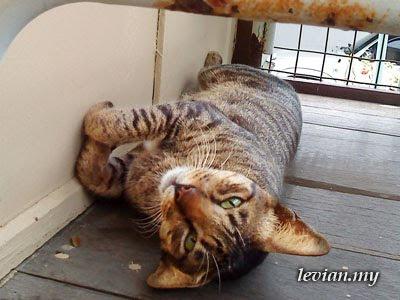 Cat (SE f100i)