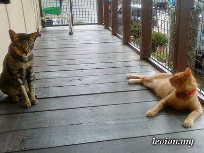 Cats (SE f100i)