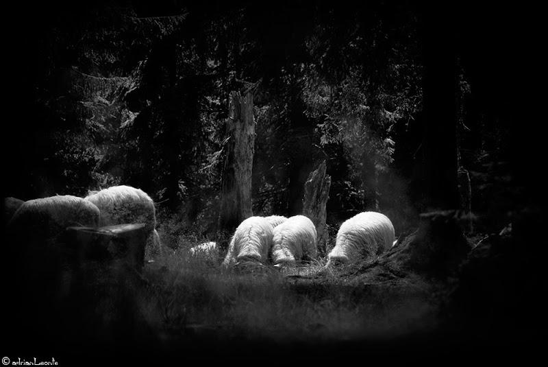 cionanul care nu stie cum sa scape de turma isi omoara cainele/ ciobanul care vrea sa scape de caine spune ca-i turbat