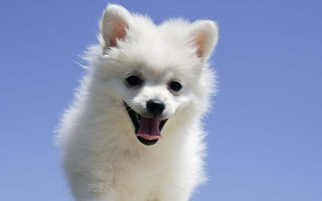 cute puppies wallpapers. wallpaper cute puppy.