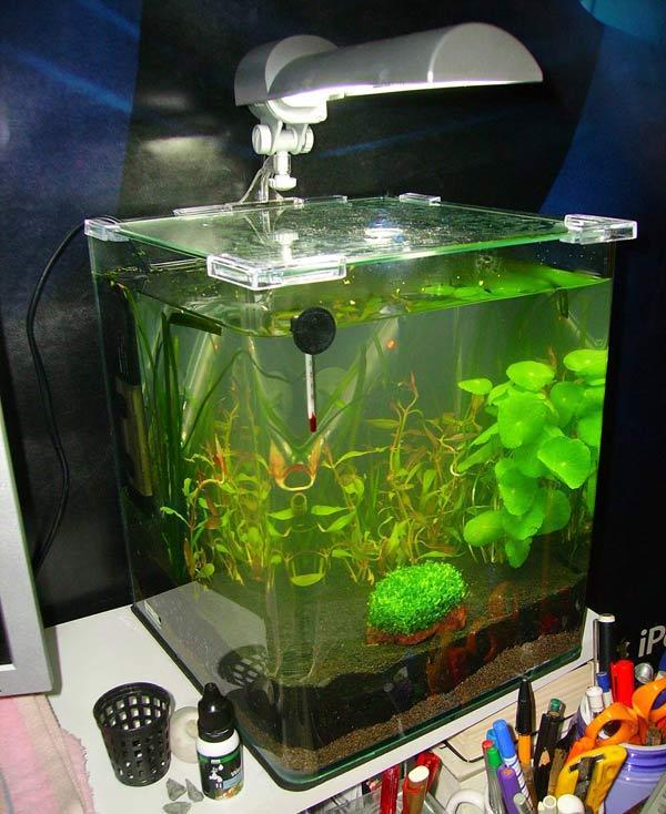 Lancement d 39 un petit aquarium 20l for Petit aquarium