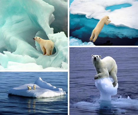 Unless we take effective action now the polar bear will likely