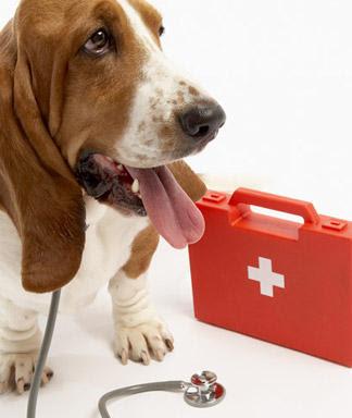 RCP y Primeros Auxilios para Mascotas (COMPLETO!) {MEGAPOST}
