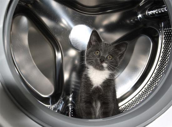 99 Foto Kucing Lucu Cantik Manis Dan Imut