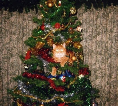 Cats on Christmas Tree Seen On www.coolpicturegallery.us