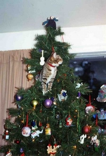 Cats on Christmas Trees