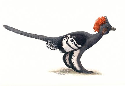 [anchiornis-huxleyi-final-jpg-9fa7754d9104c877_large.jpg]