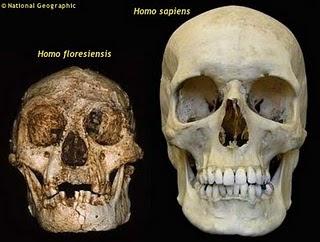 http://1.bp.blogspot.com/_fvNI-DfAGps/S0NlFM1jYEI/AAAAAAAAAbg/Ov_HssRmMaE/s320/homofloresiensis.jpg