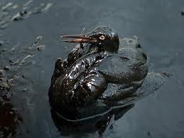 Doomed Bird Stuck In Oil