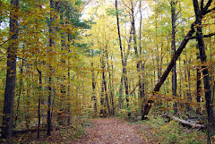 Skidmore Woods