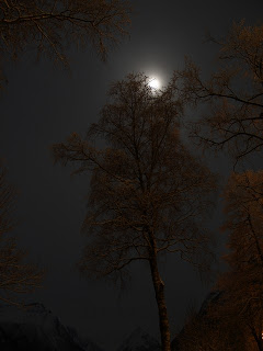 Tree and moonlight