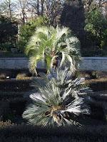 Plantes à Montpellier
