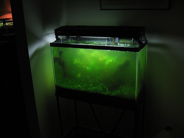 Top Algae Eaters for Fish Tank | Exotic Tropical Ornamental Fish Photos With Names | Fish Secrets