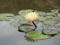 May we live like the lotus at home in the muddy waters.