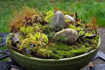 moss garden on pinterest growing moss string garden and terrarium. Black Bedroom Furniture Sets. Home Design Ideas