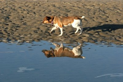 Salty Dogs Goldens Reviews