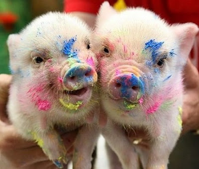 pigs, painted pigs, cute, color