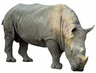 http://1.bp.blogspot.com/_g3IvWv6IIX4/S7uSm2cQMtI/AAAAAAAABuk/WA6PMxWHSNU/s1600/Rhino_1.jpg