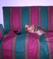 Maguie en sillón Mar del Plata