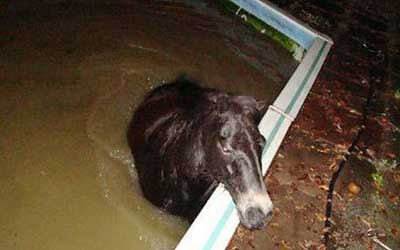 Drunken Horse in Swimming Pool
